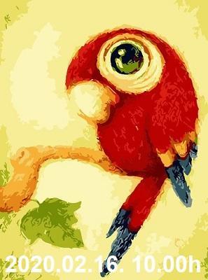 baby papagáj