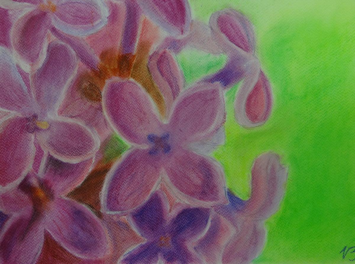 Orgona-pasztell rajz