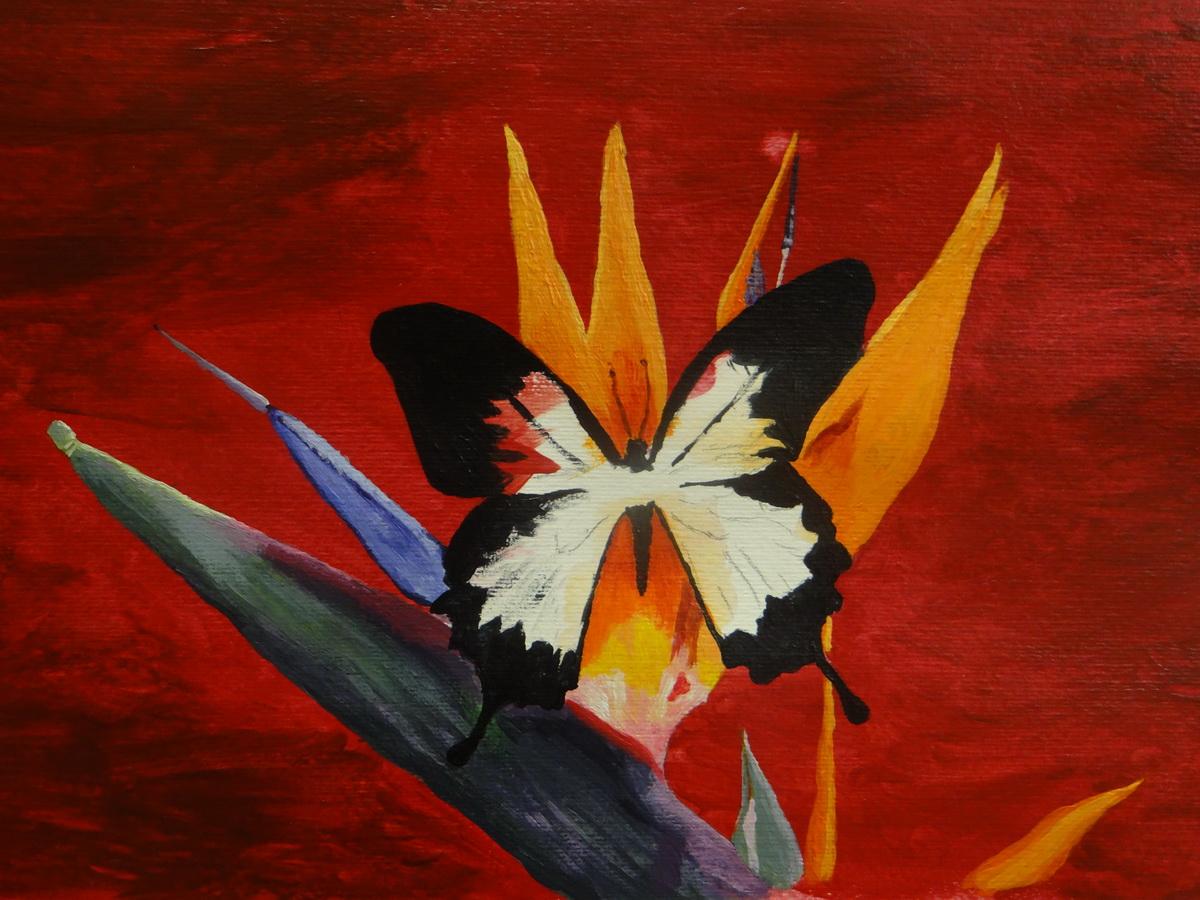 Pillangó-akril festmény