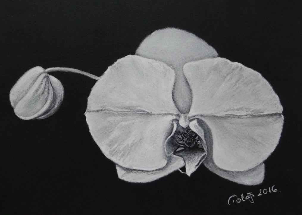 Orchidea - Black